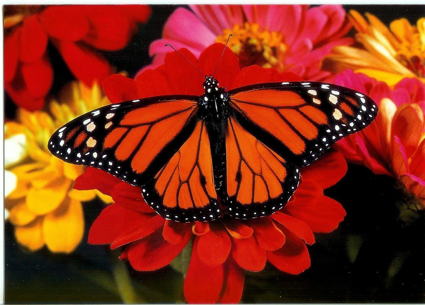 notecard-monarch-butterfly