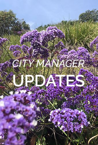 city manager updates newsflash purple flowers